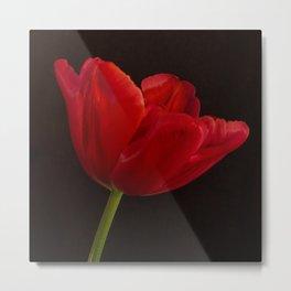 Red Tulip 3 Metal Print