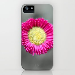 Blossom from a Daisy Isolated on Gray Background iPhone Case