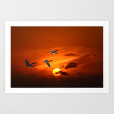 sunset and herons in fly Art Print