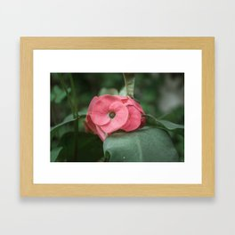 Corona de Cristo - Flower Photography Framed Art Print