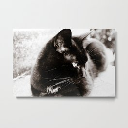 her majesty the cat Metal Print