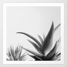 Succulents II Art Print