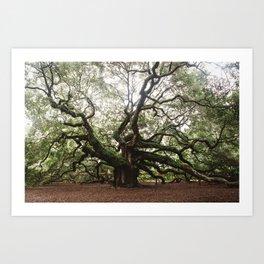 The Angel Oak Art Print