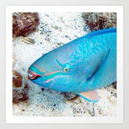 Watercolor Fish, Queen Parrotfish 01, St John, USVI, Coral Reef Savers Art Print