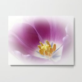 Tulpe Metal Print