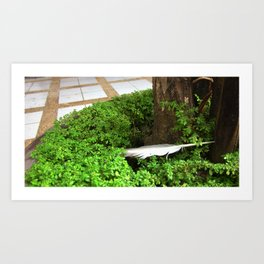 Feather In Green Art Print