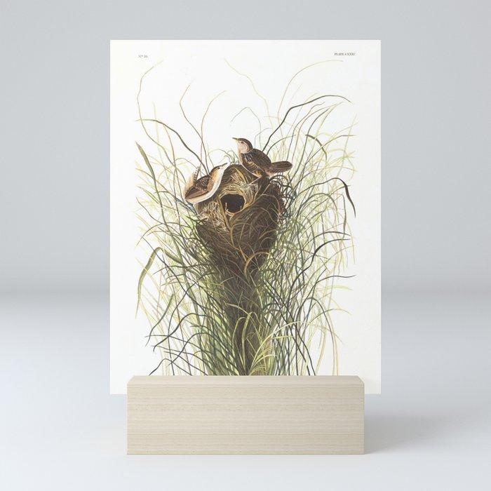 Nuttall's lesser-marsh Wren by John Audubon Mini Art Print