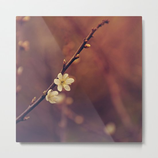 White Cherry blossom Metal Print