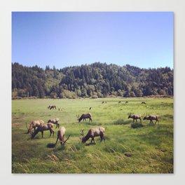 Elk Reserve Canvas Print