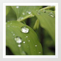Green Leaves After Rain Art Print