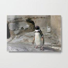 Humboldt Penguin Metal Print