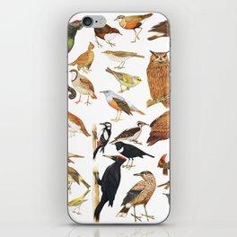 bird collection iPhone Skin