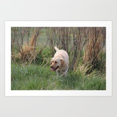 Yellow Lab Dog Hunting Art Print
