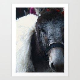 Donkey King by ZH Art Print