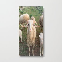 A Flock Of Sheep In A Rural Setting Metal Print