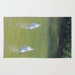 No more Swan Lake this season, please Rug