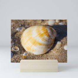 Sea Shell. Hawks Nest. NSW. Australia. Mini Art Print