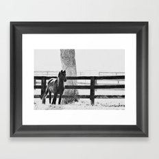 horse by the fence Framed Art Print