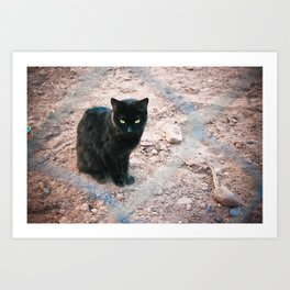 black cat. Art Print