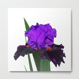 Iris 'Visiting Royalty' Metal Print