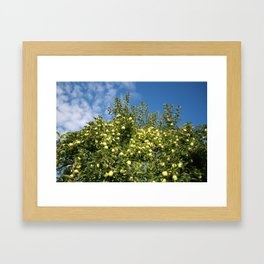Green Apples & Blue Skies Framed Art Print