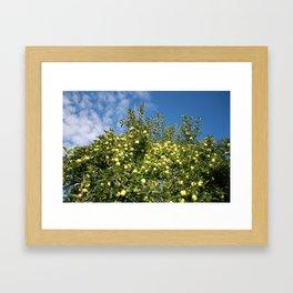 Green Apples & Blue Skies Framed Art Print