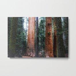 Alder Creek Giant Sequoia Grove California Metal Print