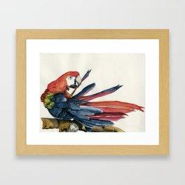 Parrot Grooming Framed Art Print