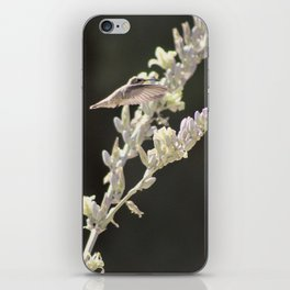 Hummingbird Hovering over Hesperaloe Parviflora Flower on Black iPhone Skin