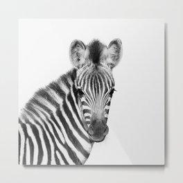 Baby Zebra Metal Print