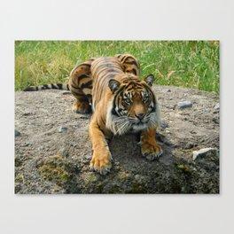 Crouching Tiger Canvas Print