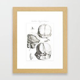 Human Anatomy Art Print HEAD BRAIN SKULL Vintage Anatomy, doctor medical art, Antique Book Plate, Me Framed Art Print