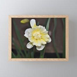 Amazing Daffodil Framed Mini Art Print