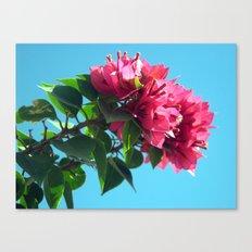 Brightest Buganvilia Canvas Print