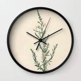 justicia orchioides Redoute Roses 3 Wall Clock