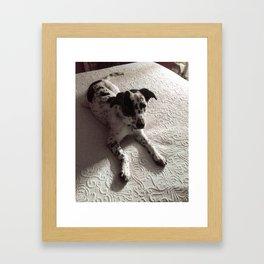 Puppy on Bed Framed Art Print