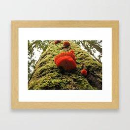 climb to the top Framed Art Print