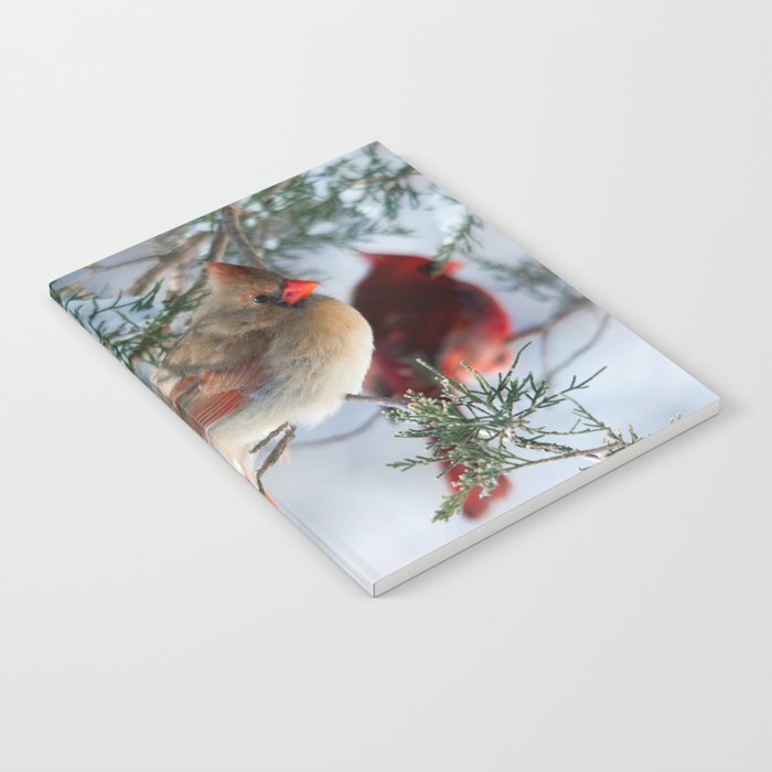 Shining on Her Own (Cardinal) Notebook