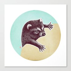 Climbing Raccoon Canvas Print