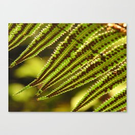 Early Morning Fern Canvas Print