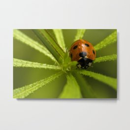 Ladybug in the center Metal Print