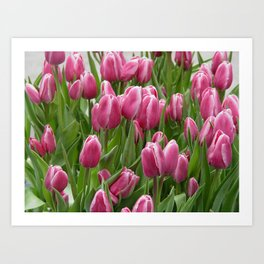 Easter Tulips in New York Art Print