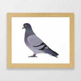 Side View Pigeon Framed Art Print