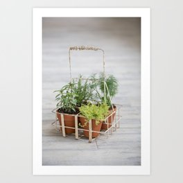 Potted Herbs on Gray Backdrop Art Print