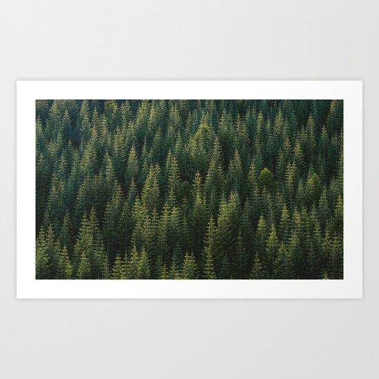 Evergreen #woods Art Print