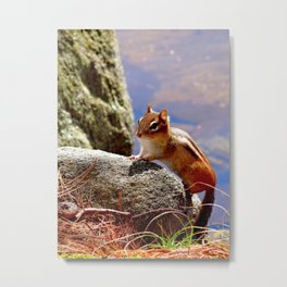 Portrait of a Chipmunk Metal Print