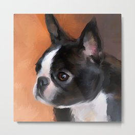 Perky Boston Terrier Metal Print