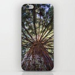 Beautiful Trees / 3 iPhone Skin