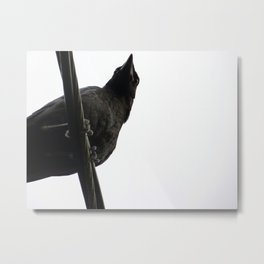 Crow on Wire Metal Print