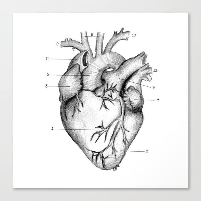 Anatomical Heart Canvas Print By Carmenszetodesigns Society6